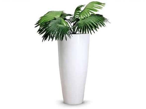 Plantes vertes pour humidifié la pièce du piano